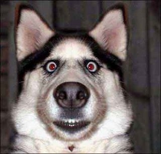 [Image: imagesdumbstruck-dog-small.jpg]